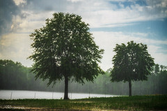 trees in rain (Wits End Photography) Tags: pond trees nature water sky farm weather rain agrarian blue building country crop homestead plain plant pool rural rustic solitary structure landscape