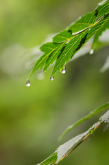 Forest (Psztor Andrs) Tags: macro green nature water forest lens photography drops nikon hungary mood dof sigma dew shallow leafs calmness andras 105mm pasztor d5100