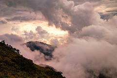 Albizzia julibrissin mountain, Taiwan  ( (Morris)) Tags: blue sunset sky bw orange cloud flower green car yellow nikon oldstyle ngc taiwan      tw                      108k    d7100