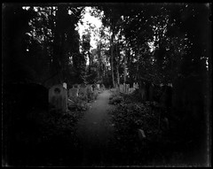 Tower Hamlets Cemetery Park 2 (Tea, two sugars) Tags: ilford ortho film blackandwhite orthochromatic orthochromaticcopyfilm 5x4 4x5 velopex radiographic chemical velopexradiographicchemical xray developer fixer harmantitanpinholecamera4x5 harmantitan harmantitanpinhole pinhole towerhamletscemeterypark towerhamlets cemeterypark tower hamlets cemetery park londonfilmphotographymeetup