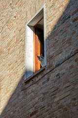 Peek-a-boo (Leonardo Caggianelli) Tags: old light shadow italy cats window cat alley day geometry samsung frame marche simmetry samsungnx samsungnx3000
