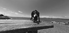 Boston B&W (KnightedAirs) Tags: ocean dog beach dogs boston digital point photography photo sand nikon play terrier isabel d5200