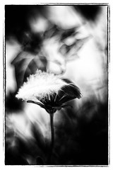 ** (dorothe_deppner) Tags: white black electric mm pentacon 18 50 dorothe deppner