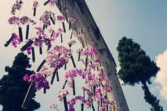 "Flower exhibition in ""Dazaifu Tenman-gu"". () Tags: favorite jp    photoshop"
