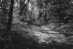 Going somewhere (Marco MCMLXXVI) Tags: trees blackandwhite italy nature monochrome forest landscape outdoor hiking path sony natura trail po sentiero cuneo biancoenero bosco foresta paesana rawtherapee a6000