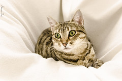 Me Escurro?... En El Hueco De La Manta II... (MANZANA CIDA) Tags: animal gato mascota