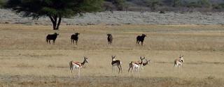 Botswana Hunting Safari 15