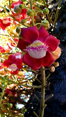 Nokia 808 (luiz2031) Tags: flower nokia nokia808