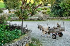 Penela da Beira, Portugal (Gail at Large | Image Legacy) Tags: portugal 2014 gailatlargecom peneladabeira viseudistrict