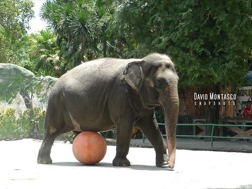 Elephant Mali