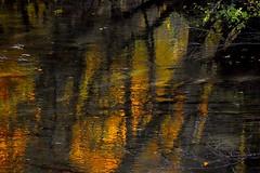 _DSC1166 (andoni.guridi) Tags: autumn fall spain otoño navarra 2014 basaburua