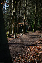 Tree peeps (judy dean) Tags: trees light arboretum batsford 2015 woooow judydean sonya6000