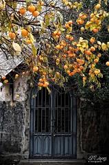 La puerta de la ermita (E.M.Lpez) Tags: andaluca puerta medieval fruta noviembre rbol entrada otoo jan caqui 2014 gtica conquista gtico reconquista otoal frutal edadmedia fuentedelrey alcallareal ermitadelacoronada lacoronada