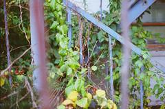Vines (Bryce Conor Buchanan) Tags: city streets film canon downtown rooftops springfield canonae1program lomographyfilm
