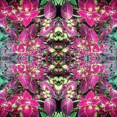 (CassidyRoseImaging) Tags: light color nature leaves photoshop colorful kaleidoscope mandala symmetry trippy psychedelic coleus kaleidoscopic refelection