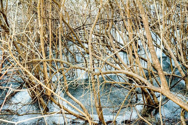 Wabash Lowlands Nature Preserve - January 6, 2015