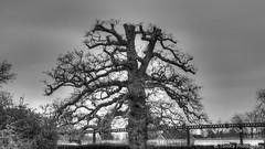 Cutted Tree (Tom.Ka) Tags: bw tree monochrome landscape sony a350