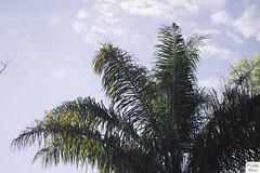(pabbloelias) Tags: street door trees light shadow sky sun lake tree film nature water leaf nikon branch fuji natural bokeh kitlens faded brunch fade leafs lightroom instax bokehlicious vsco instagram nikond3100 vscofilm vscocam