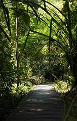 #forest #mangrove #tanjungtuan #portdickson #malaysia (kerchuan88) Tags: forest mangrove malaysia portdickson tanjungtuan