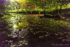 (GenJapan1986) Tags: autumn japan night kyoto    25mm 2014     nikond600 zf2 distagont225