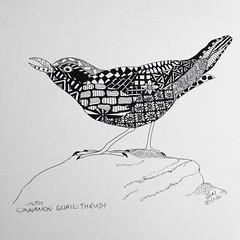 Cinnamon Quail-Thrush (dawnmagee) Tags: bird art nature mono drawing wildlife australia bnw zentangle derwentgraphiks