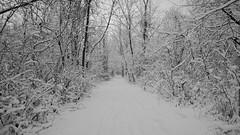 Winter Wonderland At Whitnall Park-18 (Ben Roeger) Tags: park winter snow wisconsin january waterfalls snowfall blizzard winterwonderland freshsnow stickysnow frozenwaterfall whitnallpark winterphotography fluffysnow milwaukeeparks january2015