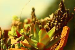partidos (andrelvas) Tags: cactus plants flower garden mini worlds mundos babi suculent suculentas vieira minimundos babivieira