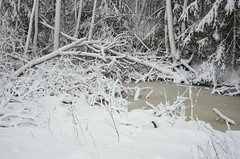 Lumeassortii (anuwintschalek) Tags: schnee winter white snow forest landscape estonia january moor snowfall lumi wald weiss mets eesti winterlandscape estland talv 2015 schneefall raba valge d7k jalase lumesadu nikond7000 talvemaastik jalasemaastikukaitseala 18140vr