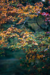 (Joo Paulo Figueiredo) Tags: autumn tree portugal colors leaves garden botanical prime nikon dof bokeh f14 85mm depthoffield botnico jardim if mf fullframe fx leafs boke coimbra manualfocus ae wideopen umc d600 samyang 11056 jpfigueiredo theworldatf12 joopaulofigueiredo jscandids