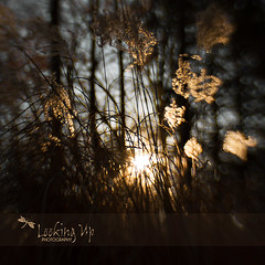 New Year | {Greenwich Fine Art Photographer} © 2014 Kahn Photography LLC d/b/a/ LOOKING UP PHOTOGRAPHY (LookingUpPhotography) Tags: new sunset blur lensbaby dof bokeh year greenwich kahn wisp fineartphotography coscob lookingupphotography lookingupphoto greenwichfineartphotographer