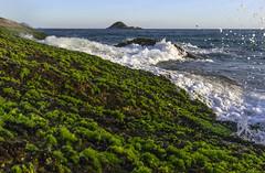116 (Rafaeltsr) Tags: sunset seaweed praia beach mar joatinga