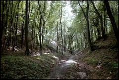 In the forest (elkarrde) Tags: trees summer green film nature forest landscape nikon croatia wideangle 200 tamron dm canoscan 2014 paradies c41 17mm colornegative f801 ultrawideangle nikonf801 devastated adaptall vuescan 8800f japetić adaptall2 canoscan8800f canoncanoscan8800f svjana camera:brand=nikon location:country=croatia dmparadies200 lens:focallength=17mm film:process=c41 paradies200 lens:brand=tamron film:brand=paradies tamronspadaptall251b17mm135bbarmc summer2014 developer:name=c41 film:name=dmparadies200 film:basesensitivity=200asa camera:format=135 lens:format=135 lens:model=spadaptall251b13517mmbbarmc lens:mount=adaptall2 location:city=svjana camera:model=f801 camera:mount=f lens:mount=f