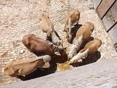 Horses eating carrots (creepyweirdslove) Tags: horse cute nature animals zoo serbia pony carrot belgrade beograd srbija zooloskivrt