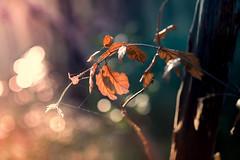 light please (marcello.machelli) Tags: morning forest woodland dawn woods alba bokeh giallo wakeup bosco rayoflight mattino raggiodiluce abrandnewday nikond810