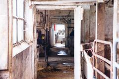 untitled-1382 (rathkopfanna) Tags: travel usa america pennsylvania culture pa lancaster amishcountry