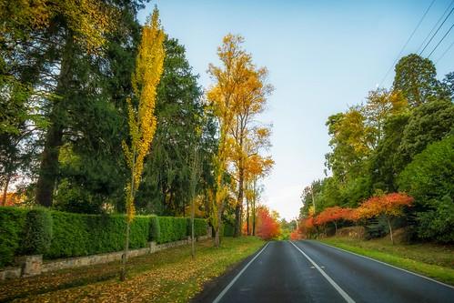 Mt Macedon Autumn Colours-10