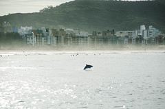 When we forget (J. Damasio) Tags: ocean santa sea brazil beach sc water buildings mar sand cityscape dolphin laguna catarina grosso bottlenose boto tursiops truncatus