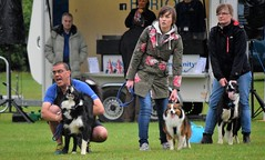 Banbury Cross Flyball - Gordon and Jack Cheer the Team On
