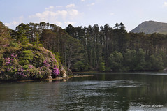 Lauragh, Co.Kerry (mcgrath.dominic) Tags: trees mountains lakes rhododendrons healypass cokerry lauragh