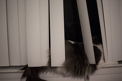 Day Eighty-Four (MBPruitt) Tags: cat sleeping adorable home blinds window animal pet