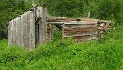 Dilapidated house (Multerland.........) Tags: trees fern nature water norway moss stream wildlife den hovel pines naturereserve shack wildflowers dilapidatedhouse hallingdal buskerud hovsfjorden june2016