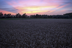 Tramonto (Valentina Conte) Tags: sunset tramonto campo field grano cereali wheat corn openspace colours sfumature shades sun light nature wonderful spighe ears padova veneto italy clouds paesaggio landscape view canon100d rebelsl1 valentinaconte summer estate seasunclouds hdr
