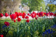 Washington DC   Instagram: @bayanalsadiq (Bayan AlSadiq) Tags: travel trees light usa sunlight green nature beauty dc washington shadows places