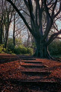 Abbotts Wood