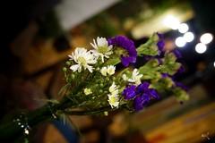Salem tm (Meo2 NT) Tags: g salem lovely niceflower yeuthuong salemtim salemflower hoasalem