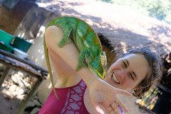 Laura and the parson's chameleon.