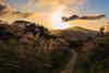 秋芒 (JeffWu0624) Tags: landscape awn 五分山 秋芒 五分山登山步道 canonef1635mmf4lis