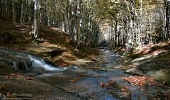 I viali della vita (EmozionInUnClick - l'Avventuriero's photos) Tags: autunno bosco cascata torrente fossonerito