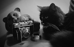 Nokia Lumia 1020 - Camera of the Day - Low Light B&W - Kodak Retina IIa (016) and the Dolf (EXPLORED) (Gareth Wonfor (TempusVolat)) Tags: tempusvolat tempus volat gareth mrmorodo cat kodak retina iia retinaiia film 35mm vintage vintagecamera puss pussy pusscat chat feline black white blackandwhite mono monochrome bw blackandwhitephotograph camera cameraoftheday pussycat gato garethwonfor mr morodo wonfor