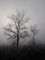 angel tree (Ivan Vranić hvranic) Tags: nature fog olympus strmec 201111